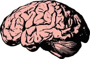 Heimtrainer und Gehirntraining